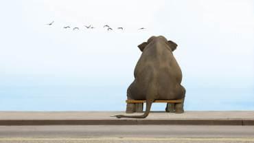 humour-elephant-001